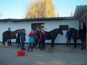 Putzen und Satteln der Pferde vor dem Reitunterricht